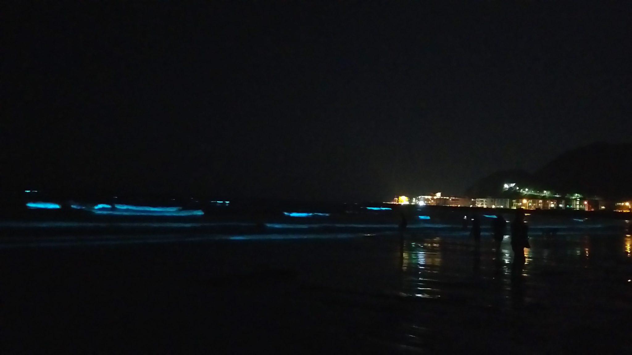 由比ガ浜 赤潮 夜光虫